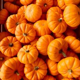 Orange_03